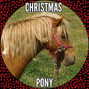 BEGINNER CHRISTMAS PONY