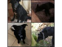 Loving Home Needed - 1 year old female collie x - Sadie - Perfect Paws Dog Sanctuary