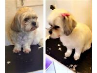 ***Mobile & Home Pets Grooming & Styling***