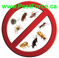 PEST EXTERMINATION & PEST CONTROL AT LOW PRICING