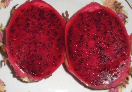 Dragon Fruit Plant - Pitaya – Scott's Purple