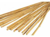 Garden Bamboo Canes bundles of 25, 4 foot long or 1200mm long