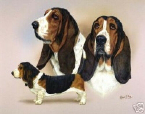 Robert J. May Multi Study - Basset Hound
