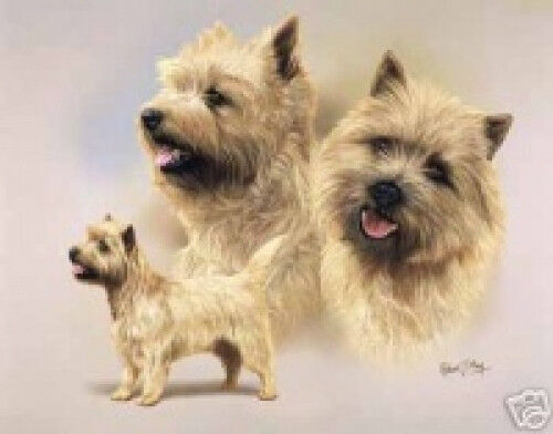 Robert J. May Multi Study - Cairn Terrier