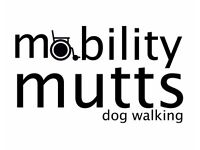 Mobility mutts dog walking services. Reliable dog walker to walk your pooch!