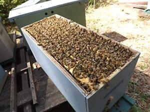 Honey Bee Nucs