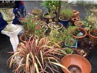 Beautiful plants in plant pots fast sale £10-20 each or £100 for job lot
