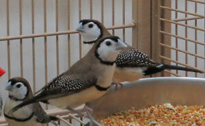 Breeder Birds For Sale Kitchener / Waterloo Kitchener Area image 1