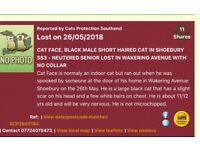 Missing!!!! Large male black cat!!!!!!