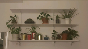 3 shelves with brackets