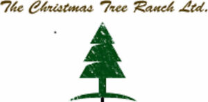 4 Year Old Colorado Blue Spruce Trees for Sale!