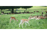 Richmond Park Social Walk Sun 27th August from 1pm