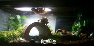 4 hermit crabs and tank