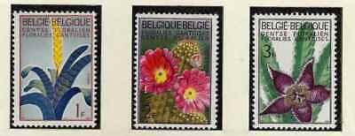 Belgien**Blumen-Cactus-Azalea-Vresia-3 Mkn-1965