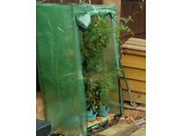 Free tomato growing house