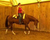 Horse back riding lessons, March break camps,  Adult programs