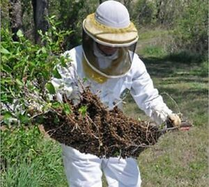 Beehive and bee swarm removal Gosnells Gosnells Area Preview