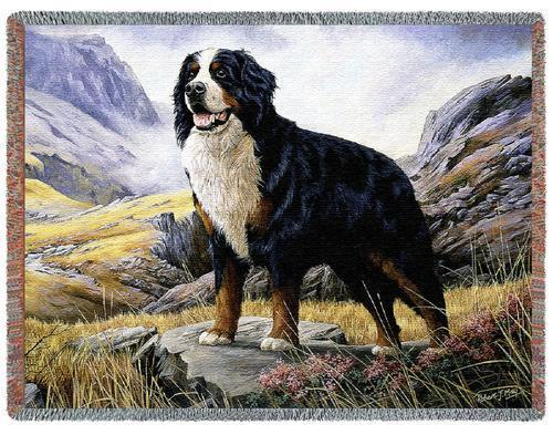 Throw Tapestry Afghan - Bernese Mountain Dog by Robert May 1935 IN STOCK