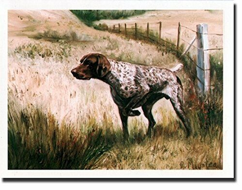 German Shorthaired Pointer Notecard Set 6 Notecards Envelopes By Ruth Maystead