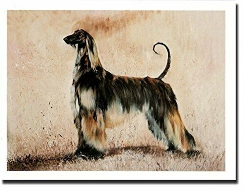 New Afghan Hound Pet Dog Profile Notecards 12 Note Cards By Ruth Maystead