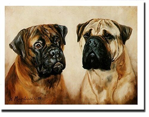 New Bullmastiff Pet Dog Pair Notecards 12 Note Cards By Ruth Maystead BLM-2