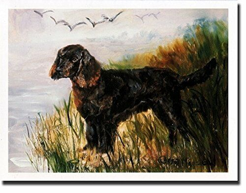 New American Water Spaniel Profile Notecards Set 12 Note Cards By Ruth Maystead