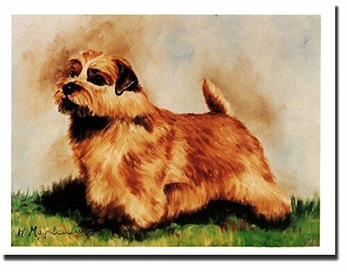New Norfolk Terrier Pet Dog Profile Notecards 12 Note Cards By Ruth Maystead