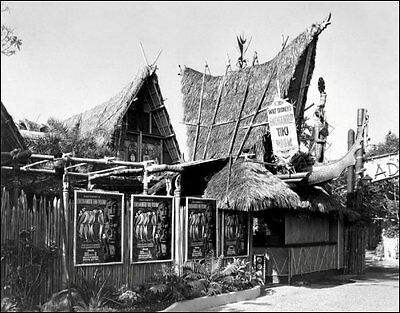 1963 Disneyland Tiki Room Photo 11x14 - Enchanted Disney Adventureland