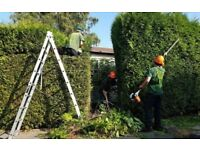 Gardening service trees cut and shaped hedges cut