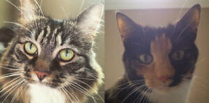 Callie & Emmie are looking for a new home