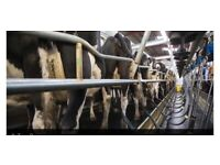 Relief milker based in Hampshire seeking part time dairy farm work