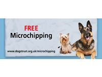 Free Microchipping / Chip Check from Dogs Trust