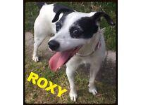 RESCUE RADIANT ROXY dog child friendly