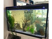 300L Tropical Fish Tank (Everything included!)