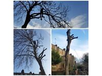 we do Tree moving, felling, crown,reductions, rifting thinning hedge trimming full insured
