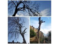 tree surgeon and hedge trimming service for free estimate call 24/7 on 07515107605 -Full insured