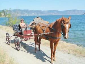Antique Doctor Buggy