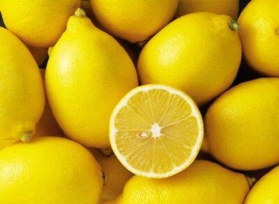 Lemon Fresh Fragrance Oil Candle/Soap Making Supplies **Free Shipping - Fresh Fragrance Oil