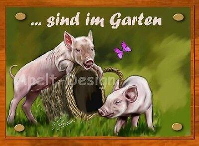 Schwein /   Ferkel   /   Schild  / Bild  / B38
