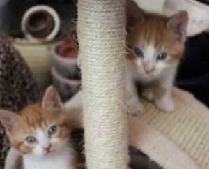 Tiny rescued kittens looking for homes