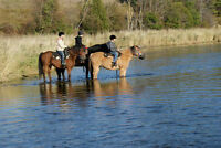 Equine Experience - Ride, Shop, Experience Mennonite Culture