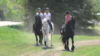 Horse Riding Summer Camp - 1 WEEK