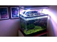 Planted mini aquarium 20l. small and very decorative