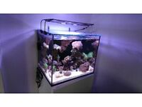 Red Sea Reefer 170 Marine Aquarium 165l in White Fish/Corals