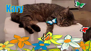 Darling Kary dreams of spring and a forever home. Carma Moncton