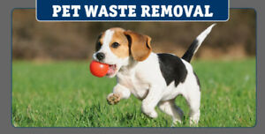 Dog Waste Removal