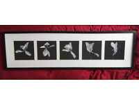 Wooden frame with five pictures Ikea Lövsta 112x33cm £15 Pick up only
