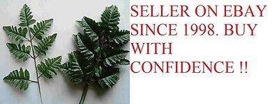 Silk Leather Leaf - 60 SILK LEATHER FERN  LEAF STEMS  FOR MAKING SILK  FLOWER  FLORAL ARANGEMENTS