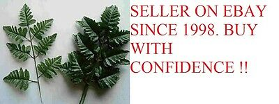 12  SILK LEATHER FERN  LEAF STEMS   WHOLESALE , HOME FLORAL, FREE SHIPPING !!!