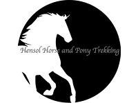 Hensol Horse and pony trekking!